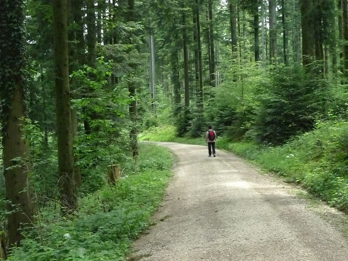 Waldweg im Rotwald