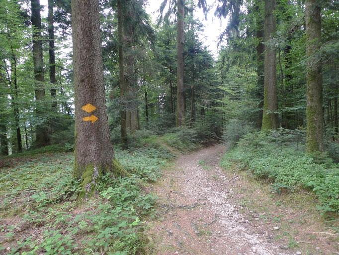 Gut markierte Wanderwege