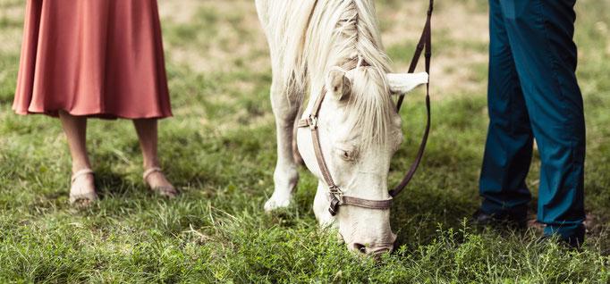 Ein Pferd zu Besuch beim Paarshooting. Hochzeitsbilder aus Mannheim.