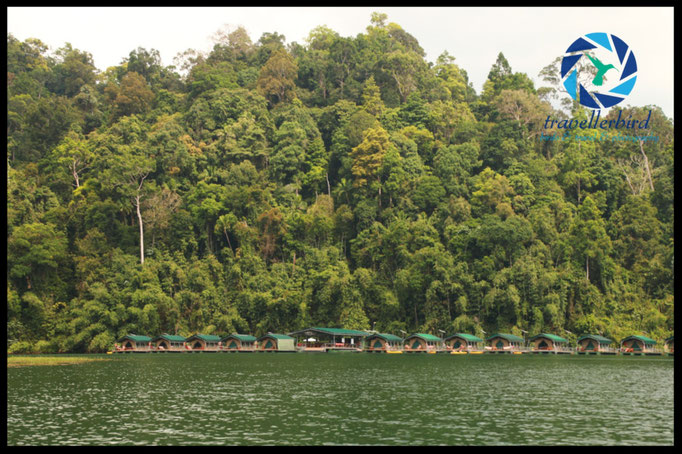 Schwimmende Zelte im Rainforestcamp