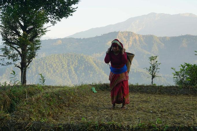 Surats Mutter bringt den Mist vom Misthaufen auf das Feld... Kilo für Kilo im Bambuskorb...