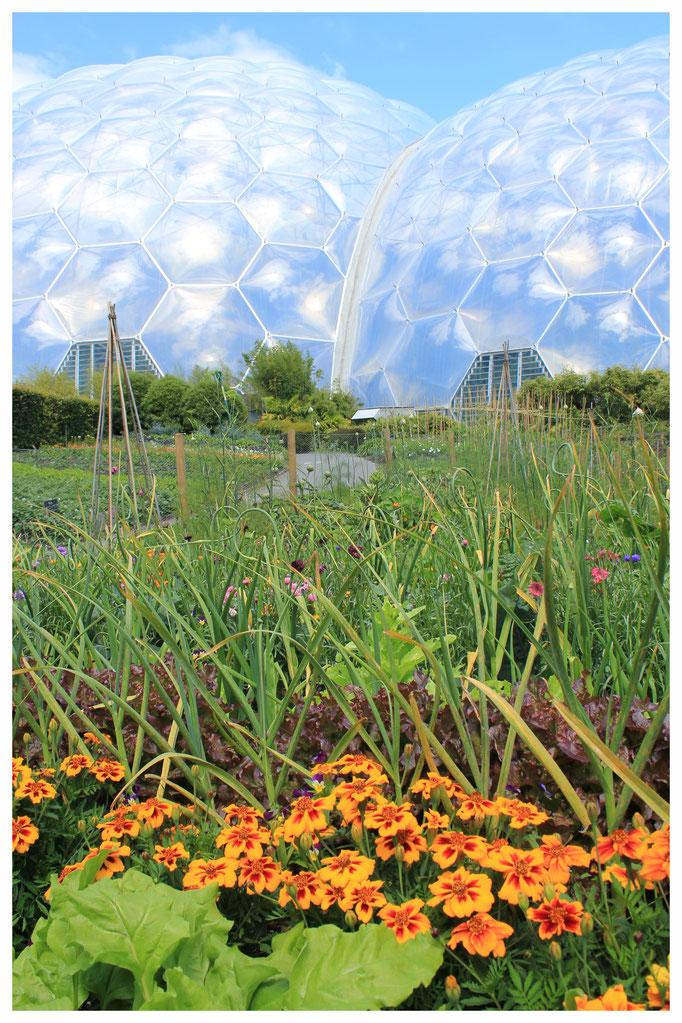 Eden Project botanischer Garten bei Bodelva in Cornwall, England