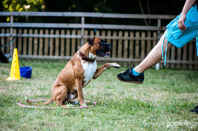 Hundeschule GOOD DOGS - Corssdogging - Spaß mit dem Hund - Die Pfote auf den Fuß legen