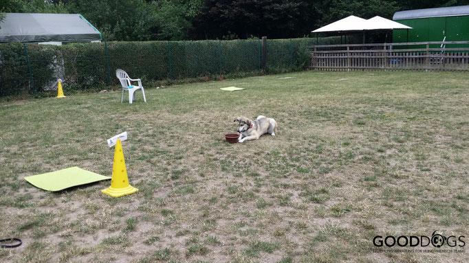 Hundeschule GOOD DOGS - Erziehung - Beschäftigung - Crossdogging - Spaß mit dem Hund
