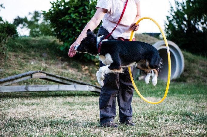Hundeschule GOOD DOGS - Corssdogging - Spaß mit dem Hund - Durch einen Reifen springen