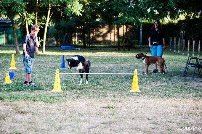 Hundeschule GOOD DOGS - Corssdogging - Spaß mit dem Hund - über eine Hürde springen