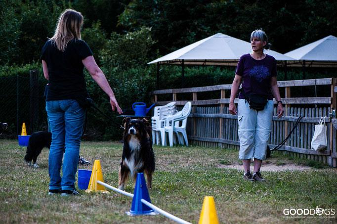 Hundeschule GOOD DOGS - Corssdogging - Spaß mit dem Hund - Longieren