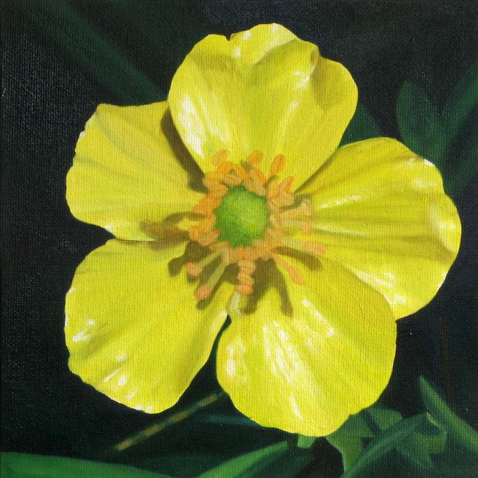 <b>Butterblume</b><br>Öl/Malkarton | 2010 | 20 x 20 cm