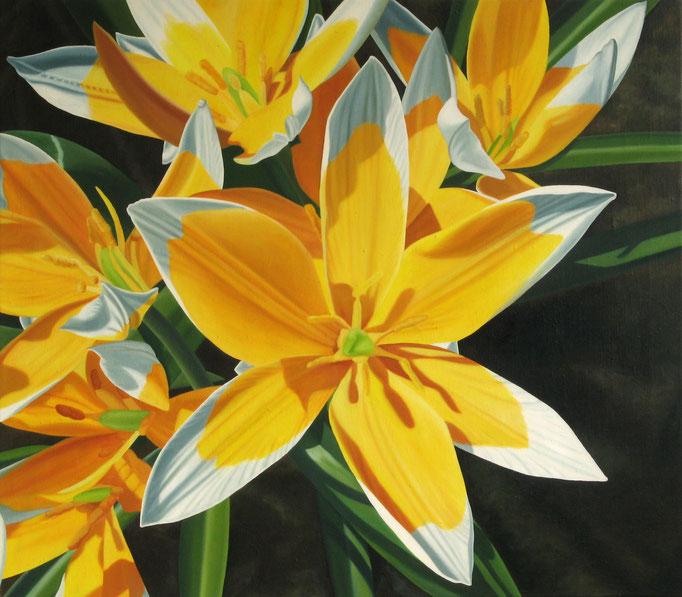 <b>Wilde Tulpen</b><br>Öl/Leinwand | 2009 | 70 x 80 cm<br><small>(Privatbesitz)