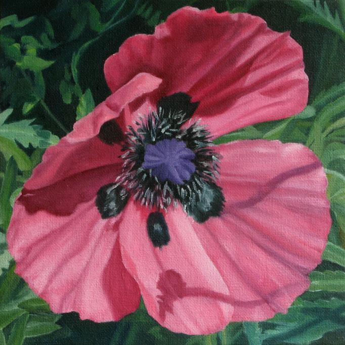 <b>Rosa Mohn 1</b><br>Öl/Malkarton | 2010 | 20 x 20 cm