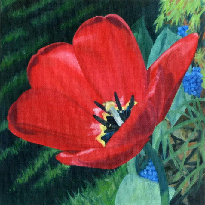 <b>Rote Tulpe 1</b><br>Öl/Malkarton | 2010 | 20 x 20 cm