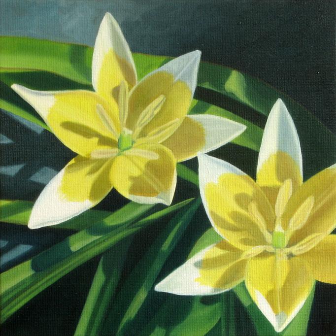 <b>Wilde gelbe Tulpen</b><br>Öl/Malkarton | 2010 | 20 x 20 cm