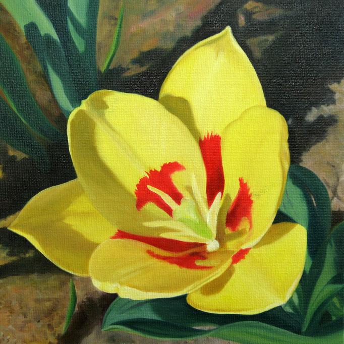<b>Gelbe Tulpe</b><br>Öl/Malkarton | 2010 | 20 x 20 cm