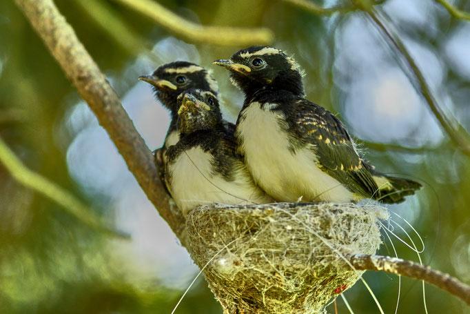 Natur, Australien