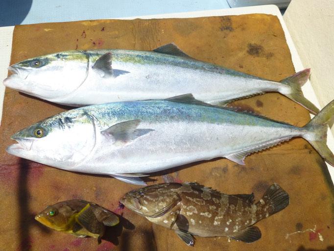 5月27日 小ぶり8kg・7kg・根魚ゲット