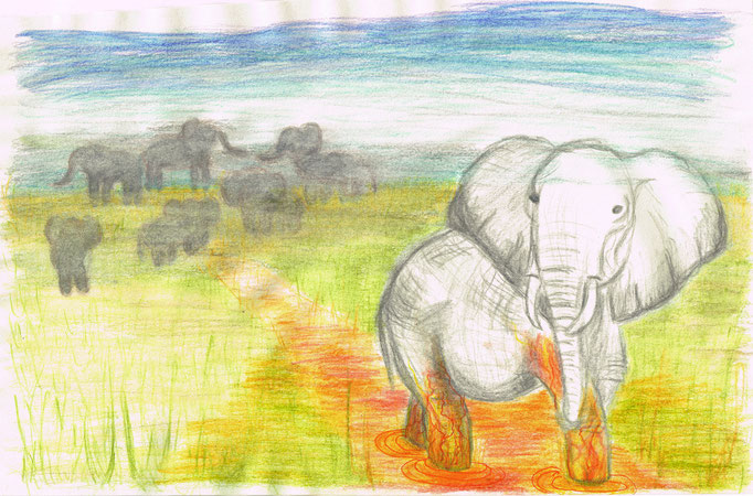 Olifant - aquarelpotlood