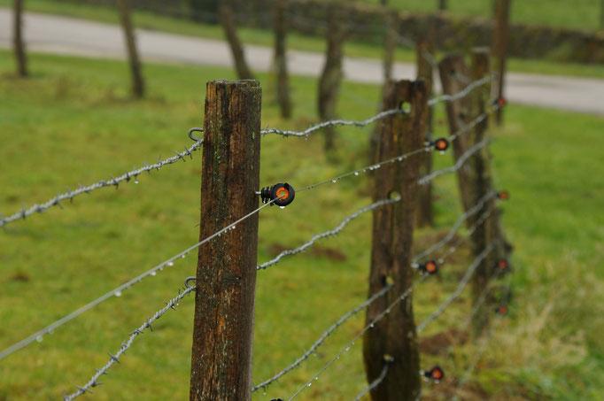 Renforcement d'une clôture existante