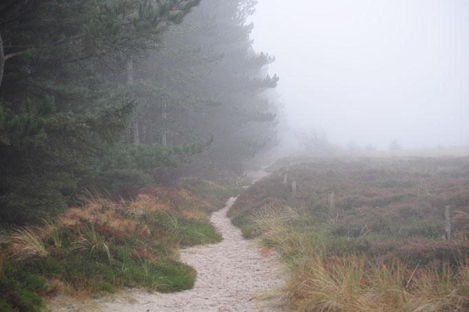 Wanderwege am Dünen- und Waldesrand