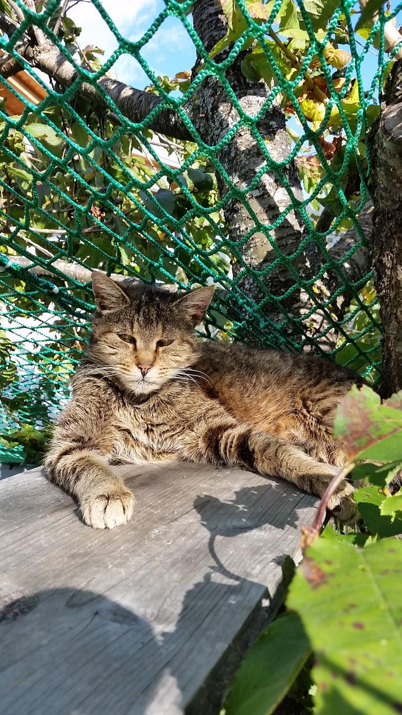 Manule am Hochsitz im Kirschbaum