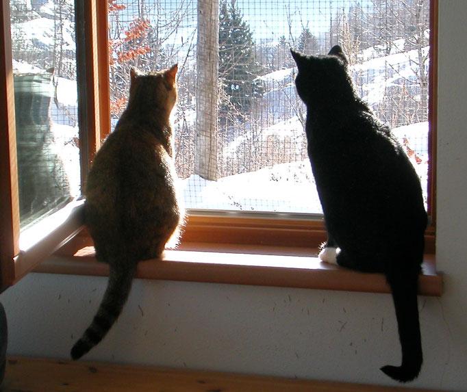 Was gibt's da draußen?