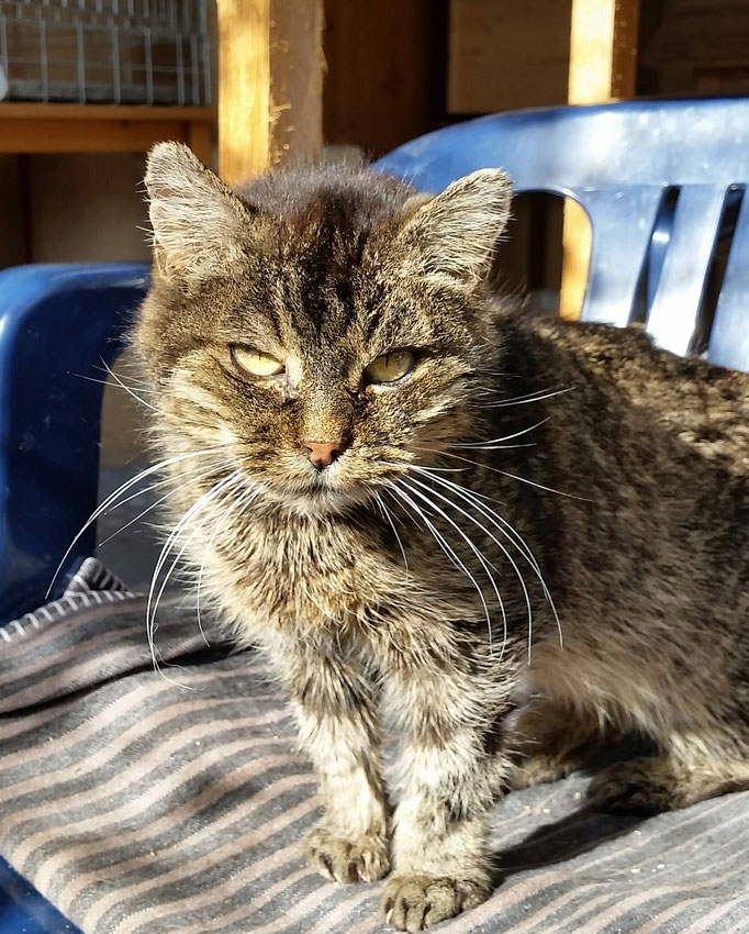 Jacky, 20 Jahre, aus Spiss, Besitzer verstorben, TH
