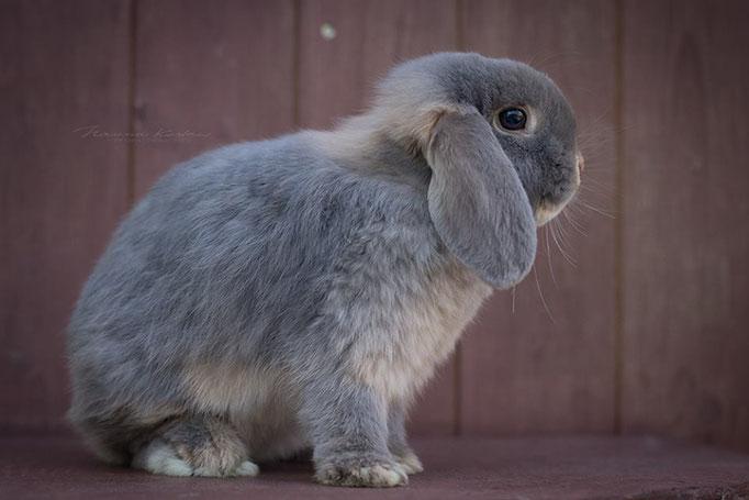 Meine schöne Rania ist die Tochter von Hathi und Enkelin von Amia. Nun darf sie ihr Leben mit 3 anderen Kaninchen und tollen Haseneltern genießen.