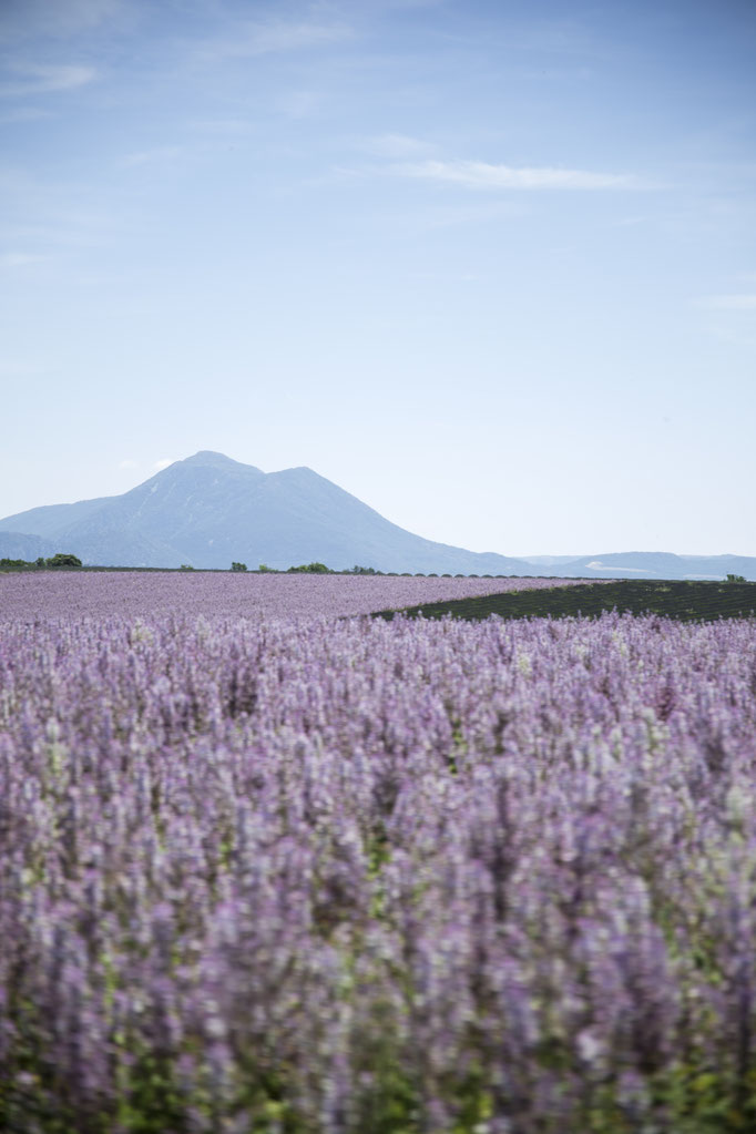 Photo taken in Valensole, France.