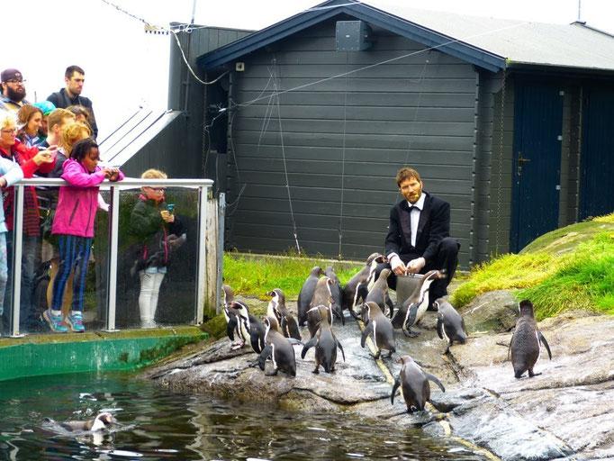Aquarium Alesund