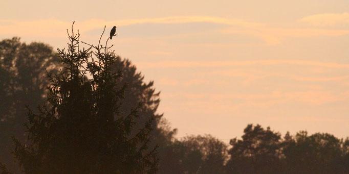 Sonnenuntergang über dem Freising Moos