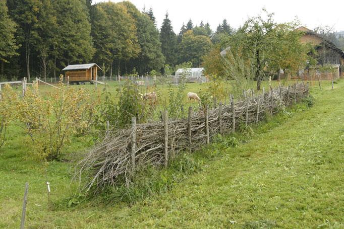 Unsere Hecken (Benjeshecken) fügen sich sehr gut in die Natur mit ein.