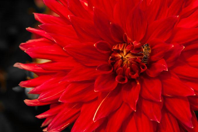 Fotos Blumen, Flora und Fauna, Pflanzenwelt und Tierwelt lizenzfrei, kostenlos und unverbindlich herunterladen