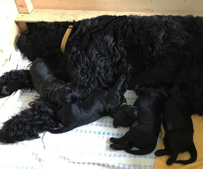 Gemeinsam schlafen ist am schönsten!
