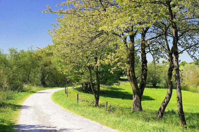 Feldweg Harzvorland