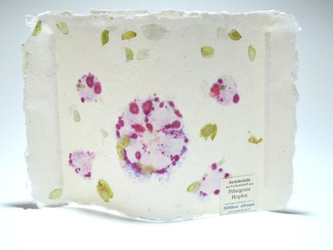 Auriolenlichtl mit Hopfen und Pelargonie