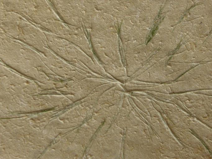 Kozo und Zinnkraut (Detail)