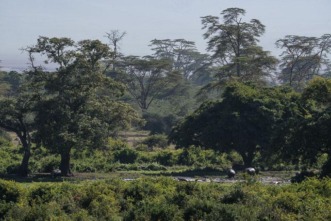Swamp, Ngorongoro Crater, Sumpf, Ngorongoro Krater