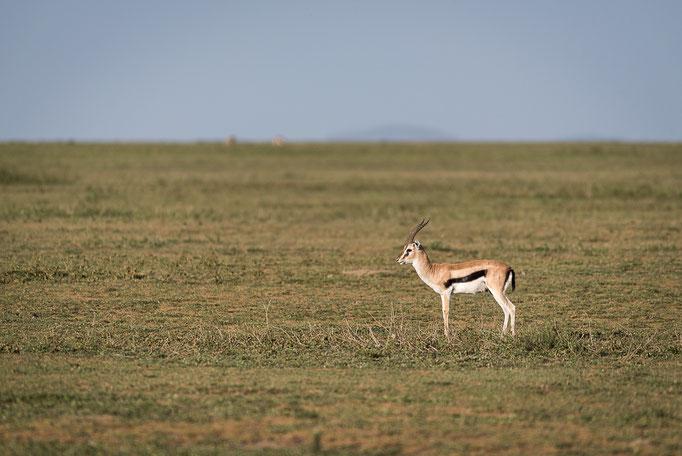 Impala, Ndutu