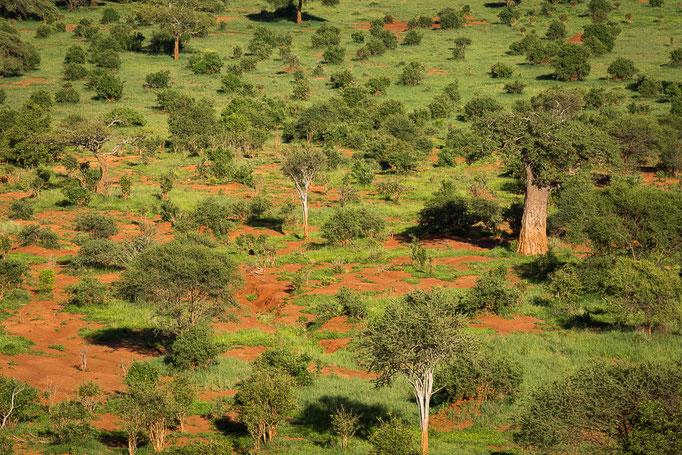 Baobab, Tarangire National Park