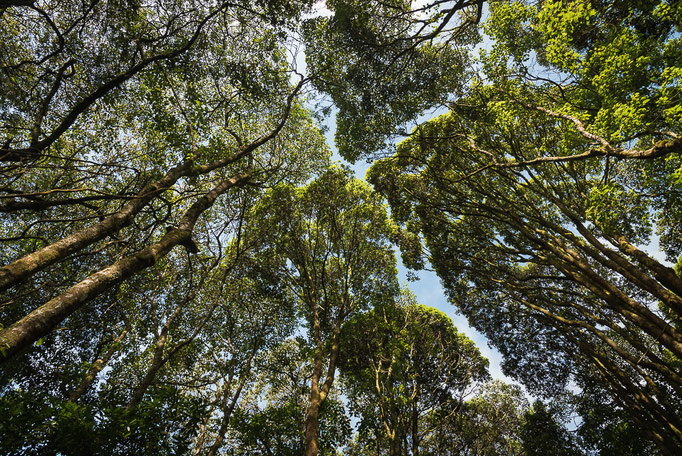 Rain forest, Kilimanjaro; Regenwald, Kilimandscharo