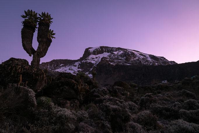 Dawn at Barranco Camp, Kilimanjaro; Dämmerung im Barrancocamp am Kilimandscharo