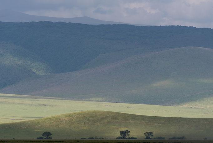 Grassland, Ngorongoro Crater