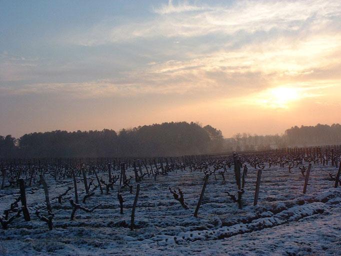 Levé de soleil sur les vignes (Janvier 2013)