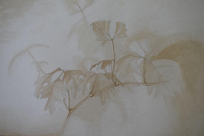 Pflanze mit Sepia gemalt, 42,5 x 62,5 cm.
