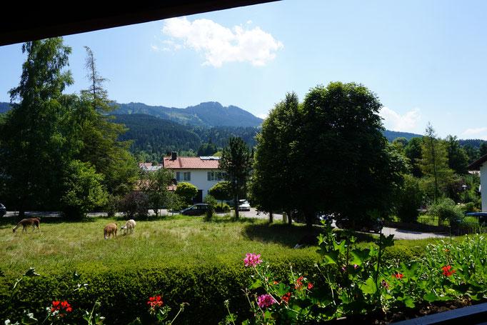 Balkon mit Südblick Fewo 4