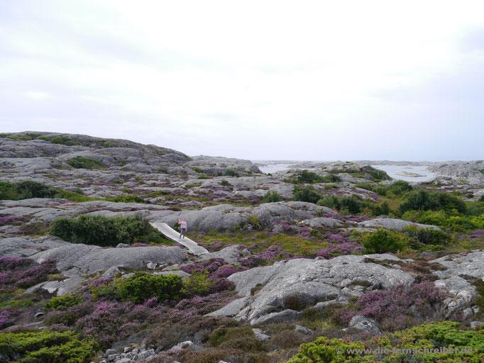 """""""Rosa Punkt"""" in weiter Landschaft..."""