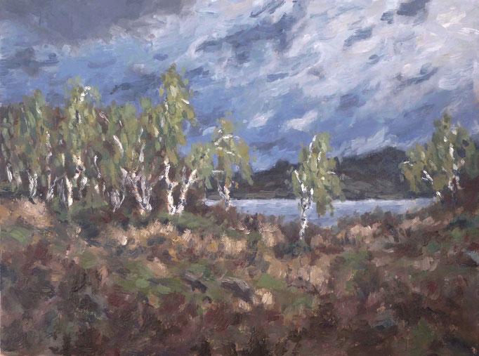 Birken, den Sturm erwartend | Öl auf Leinwand | 30 x 40 cm