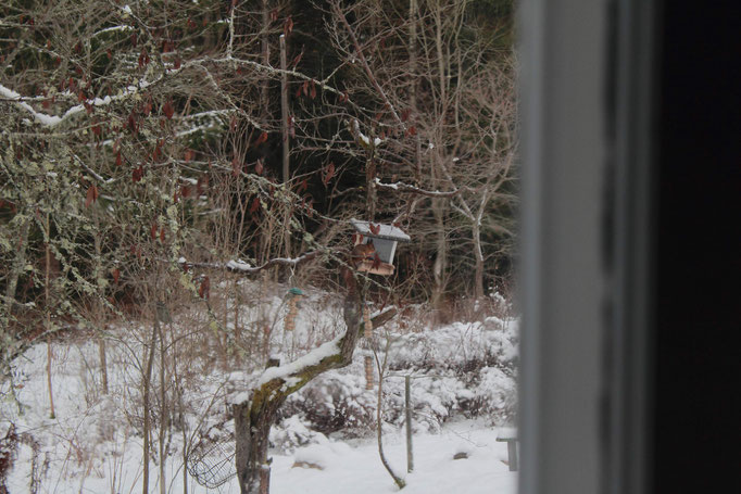 Echhörnchen am Futterhaus