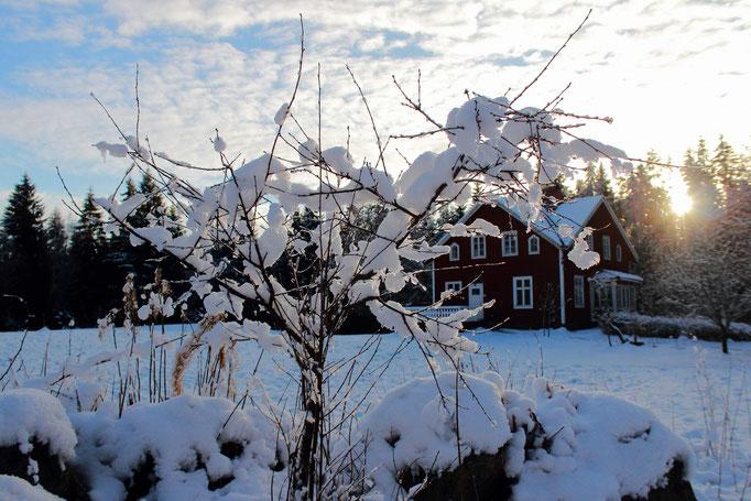 Winterbäumchen