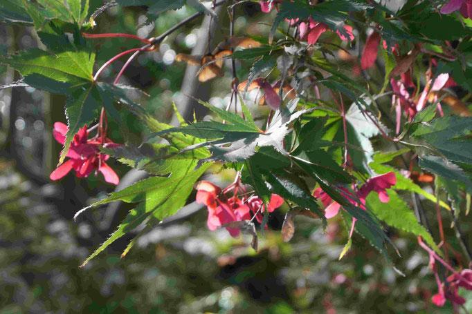 Baumblüten im Herbst