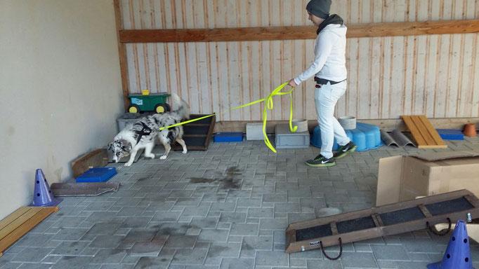Objektsuche © Hundeschule gooddog